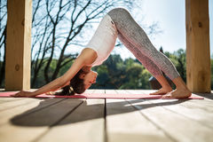 Girl in downward facing dog pose Royalty Free Stock Photography