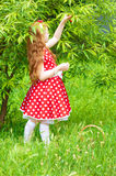 Girl in a  dress in cherry garden Stock Photo