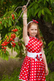 Girl in a  dress in cherry garden Stock Image