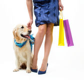 Shopping with dog Stock Photos