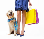 Shopping with dog Stock Photography