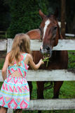 Girl In Dress Feeding Brown Horse Behind Fence. Little girl in dress feeding grass to brown and white horse behind old fence Stock Images