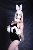 A girl dressed as a bunny studio shooting Royalty Free Stock Photos