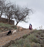 Girl drover with goats walking on the road to pasture, Morocco Stock Photo