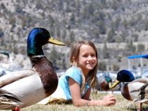 Girl with ducks. Girl lying in grassy field, duck up close Royalty Free Stock Photography