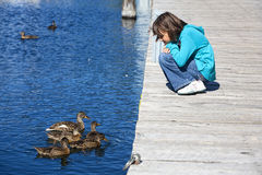 Girl and ducks look at each other. Stock Photo