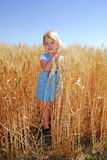 Girl in Durum Wheat Field. Happy 3 year old girl posing in durum wheat field almost ready for harvest, summer: vertical Royalty Free Stock Image