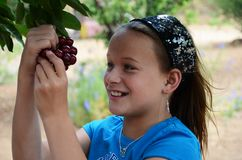 Girl Eating Cherries off of the Tree Stock Photography