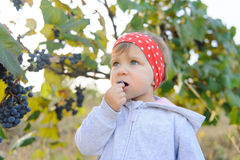 Girl Eating Grape Stock Image