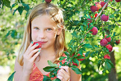 Girl eating a plum. In the orchard Stock Images