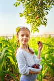 Girl eating plums Royalty Free Stock Images