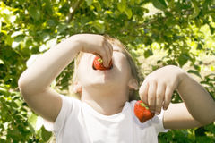 Girl eating strawberries. Stock Photo