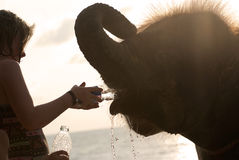 Girl and elephant. PHANG-NGA, THAILAND - JULY 04: Unidentified girl gives water to a baby elephant on July 04, 2012 at Khao Lak, Phang-nga, Thailand. Phang-nga Stock Photo
