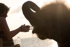 Girl and elephant Stock Photo