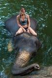 Girl on an elephant Stock Image