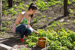 Girl is engaged in grass weeding. Girl is engaged in the spring in grass weeding Stock Photos