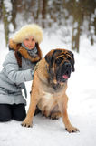 Girl with an English Mastiff Royalty Free Stock Photo