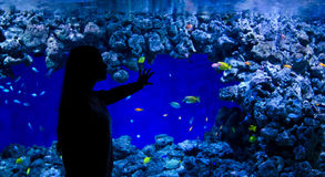 Girl enjoy aquarium fishes Stock Images