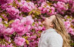 Girl enjoying floral aroma. Kid on pink flowers of sakura tree background. Botany concept. Kid enjoying cherry blossom stock photography