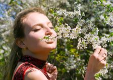 Girl enjoying smell of cherry blossoms Royalty Free Stock Image