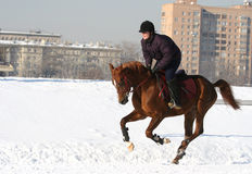 The girl the equestrian skips on a horse.  Stock Images