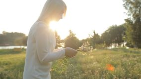 The girl in the evening gathers wild flowers stock footage