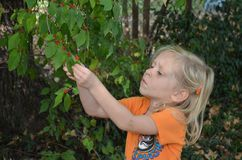 Girl examines berries Royalty Free Stock Images