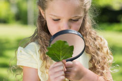 Girl examining leaf with magnifying glass at park Royalty Free Stock Image