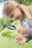Girl examining leaves with magnifying glass at park Stock Image