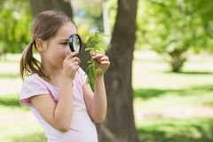 Girl examining leaves with magnifying glass at park Royalty Free Stock Photo