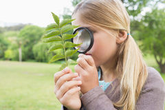 Girl examining leaves with magnifying glass at park Royalty Free Stock Photos