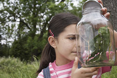 Girl Examining Stick Insects In Jar Stock Photo