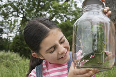 Girl Examining Stick Insects In Jar Royalty Free Stock Images