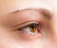 Girl eye close-up. Royalty Free Stock Images