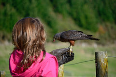 Girl and falcon Stock Photos