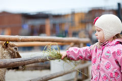 Girl at farm Royalty Free Stock Photography