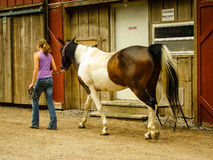 Girl on farm walking a horse past a barn Royalty Free Stock Photo