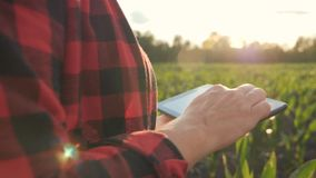 Girl farmer with a tablet monitors the crop, corn field at sunset, slow motion video. Hands up. Video in motion stock footage