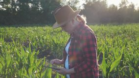 Girl farmer with a tablet to monitor the harvest, a corn field at sunset. Girl farmer with a tablet monitors the crop, corn field at sunset, slow motion video stock video