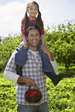 Girl On Father's Shoulders In Strawberry Field Royalty Free Stock Photos