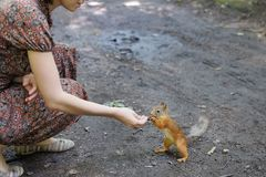 Girl feed funny little squirrel Royalty Free Stock Image