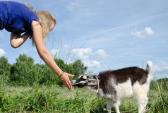 Girl feed goatling scratch snout Stock Photography