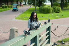 Girl feed pigeons Stock Photos