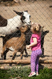 Girl feeding animals Royalty Free Stock Photo