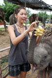 Girl is feeding baby elephant Stock Images