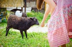 Girl feeding brown lamb Stock Photography