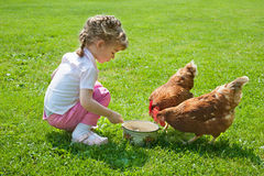 Girl feeding chickens. In lawn Stock Image