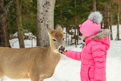 Girl feeding deer in the Omega Park of Quebec Stock Photography