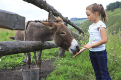 Girl feeding donkey carrot. Royalty Free Stock Image