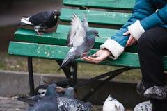 Girl feeding doves Stock Photos